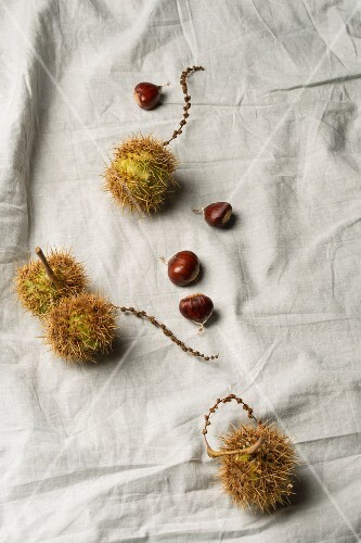 Sweet chestnuts on grey fabric