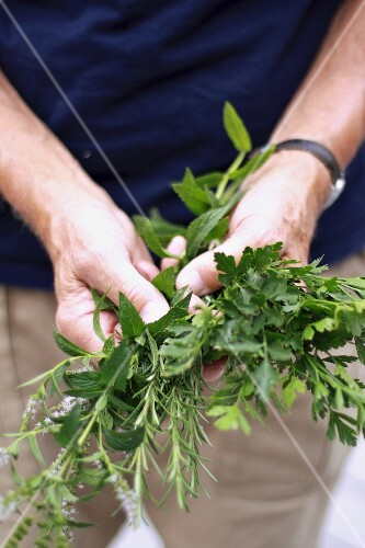 A man's hands holding assorted fresh herbs