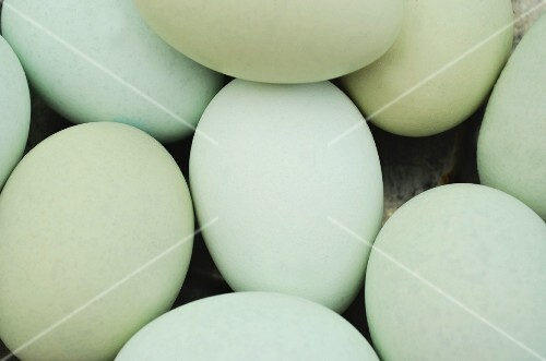 pastel blue and green eggs (close up)