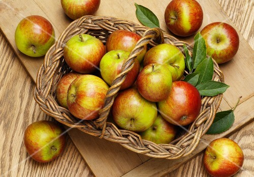 Fresh Cox apples with leaves in a basket