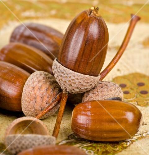 Several acorns (close-up)
