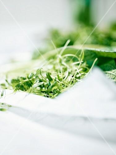 Fresh herbs as ingredients for Frankfurt 'Green Sauce'