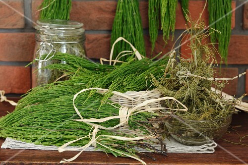 Common horsetail prepared for drying