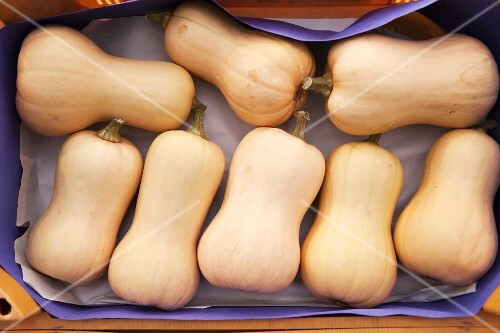 Several butternut squash in a crate (view from above)