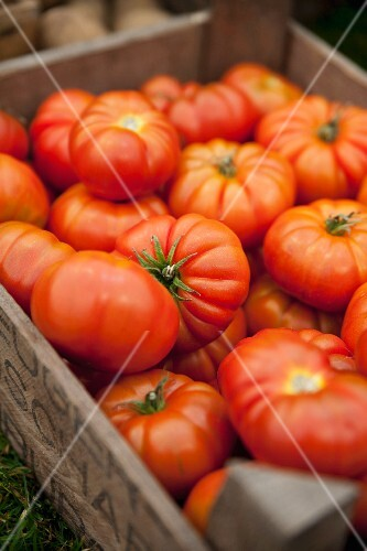 Lots of beef tomatoes in a crate