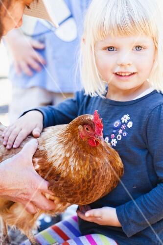 A Little Girl Petting a Chicken