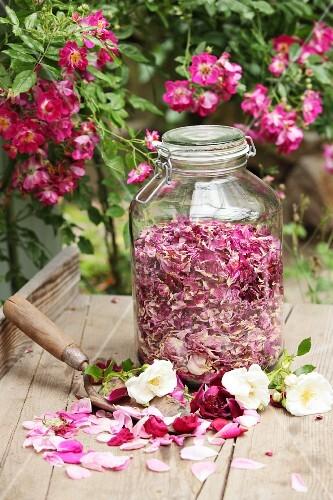 Dried rose petals in storage jar
