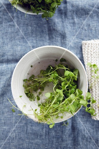 Chickweed in a small bowl