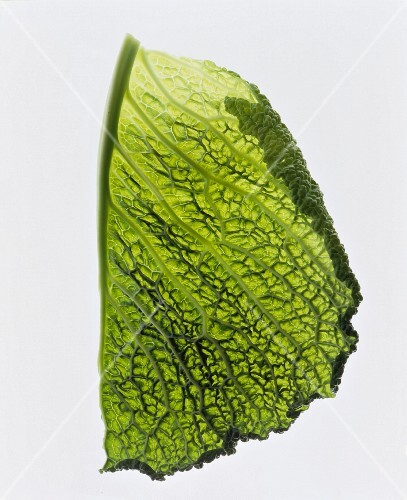 A leaf of savoy cabbage on a white surface