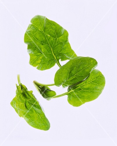 Spinach leaves against a white background