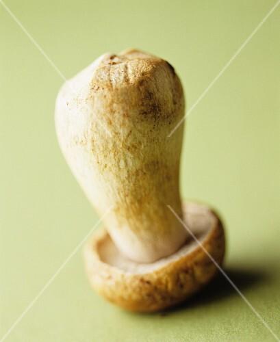 A porcini mushroom standing on its head