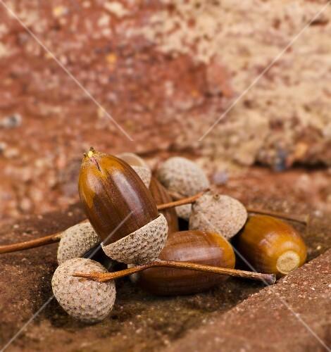Several acorns on bricks