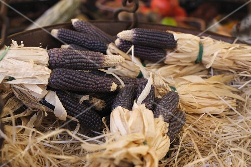 Purple corn, in bundles at the market