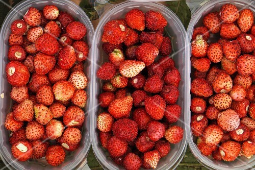 Wild strawberries in plastic containers at the market (top view)