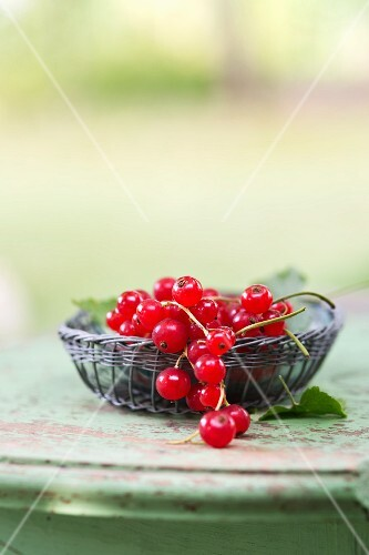 A little wicker basket with red currants (ribes rubrum) on a garden table