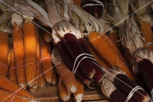Bundles of Dried Corn