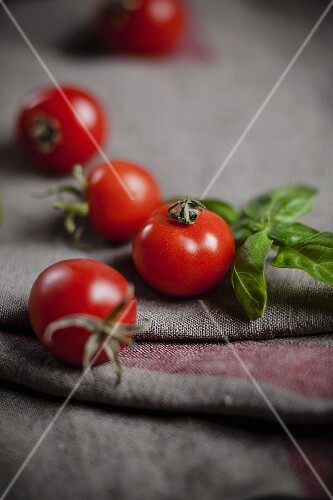 Cocktail tomatoes and basil on a linen cloth