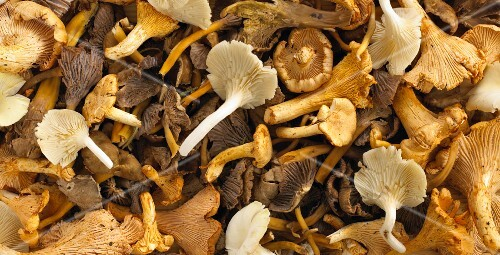 Assorted fresh mushrooms (filling the image)