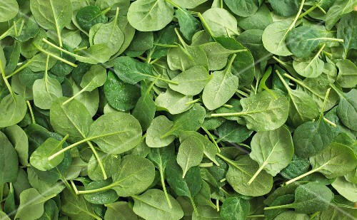 Lots of spinach leaves (filling the image)