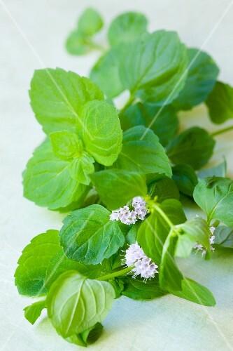 Fresh mint, in flower