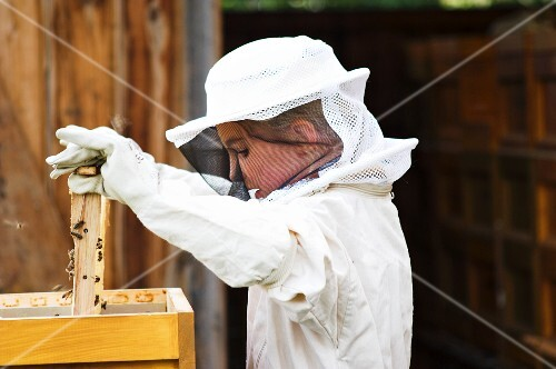 A girl dressed in a beekeeper's outfit lifting a honeycomb out of a wooden box
