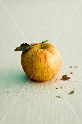 A Cox's Orange apple