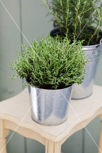 Thyme and rosemary in a zinc bucket