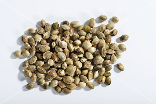 Hemp seeds (Cannabis sativum) against a white background