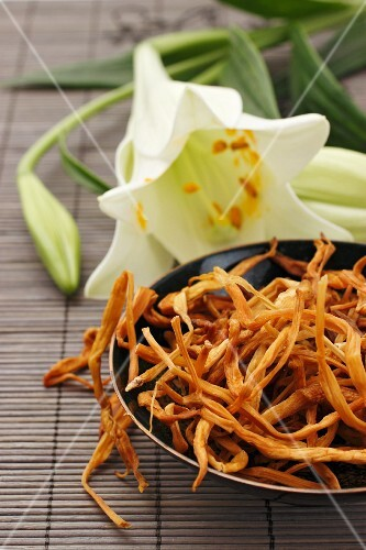 Lily flowers, fresh and dried