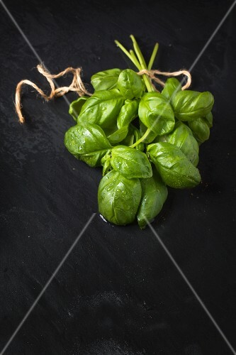 Bunch of fresh basil over wet dark stone bakground