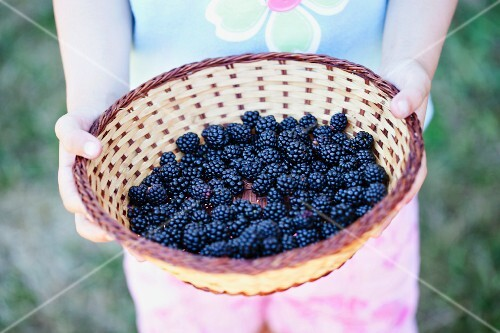 A girl holding a basket of blackberries