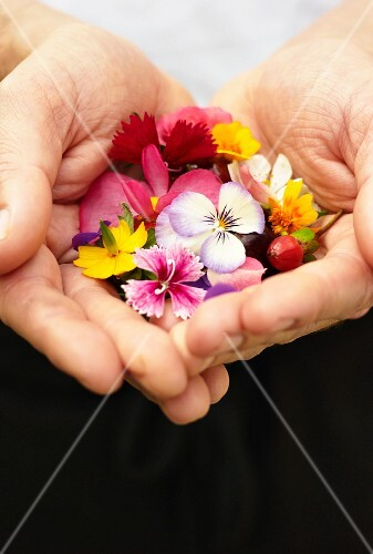 Edible flowers held in cupped hands
