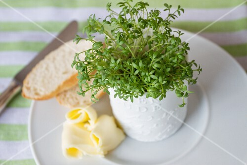 Fresh cress in a pot, slices of white bread, and butter
