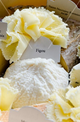 Figou (goat's cheese from France) and T