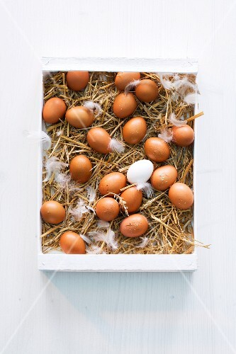 Fresh hens eggs in a wooden box filled with straw