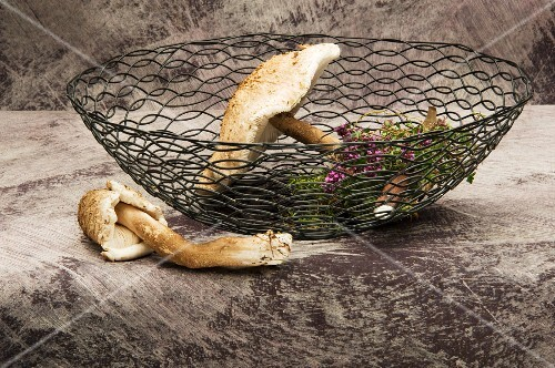 Fresh parasol mushrooms and herbs in a wire basket