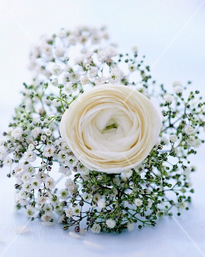Baby's breath and a rose