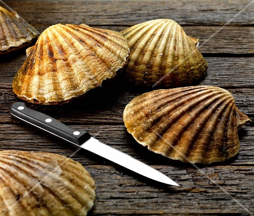 scallop in shells with knife