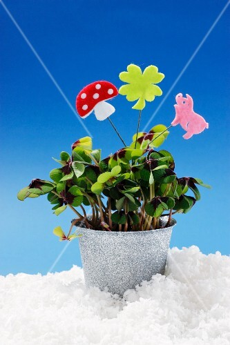 Lucky clover in a flower pot decorated with lucky symbols
