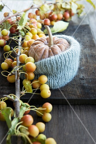 And ornamental pumpkin in a knitted cover with ornamental apples
