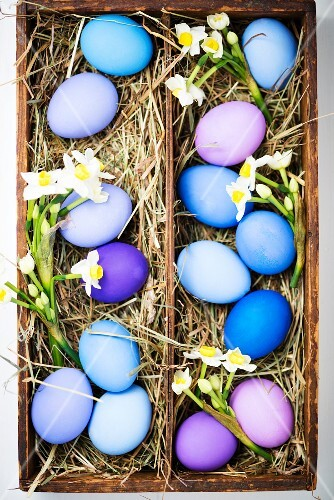 Blue and purple Easter eggs with spring flowers in a wooden box lined with hay