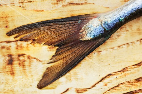 A fish tail on a wooden surface