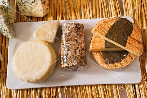 Assorted varieties of cheese