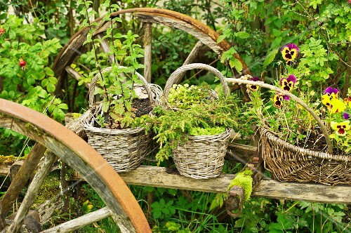 Herbs and flowers in baskets on an old wagon