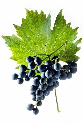 Muscat bleu grapes with a vine leaf