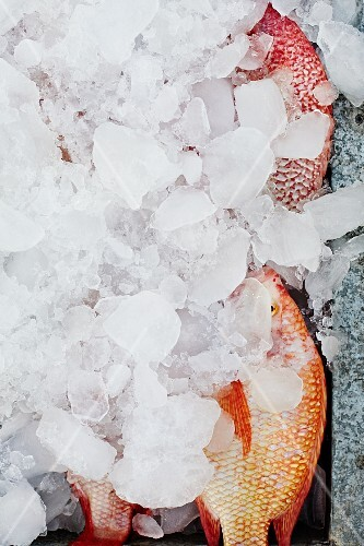 Red snapper covered with ice
