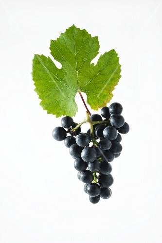 Rondo grapes with a vine leaf