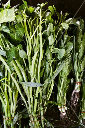 Water spinach and long coriander