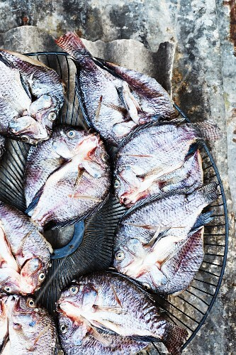 Tilapia on a grate