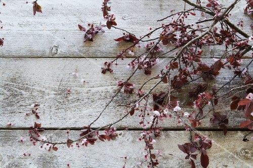 Blossoming twigs on a wooden surface